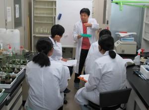植物エピジェネティクス工学研究室 「植物の遺伝子解析」